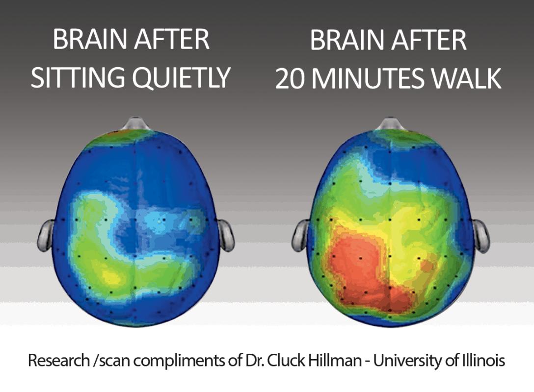 Brains FitOffice 1200